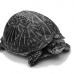 gs_turtle